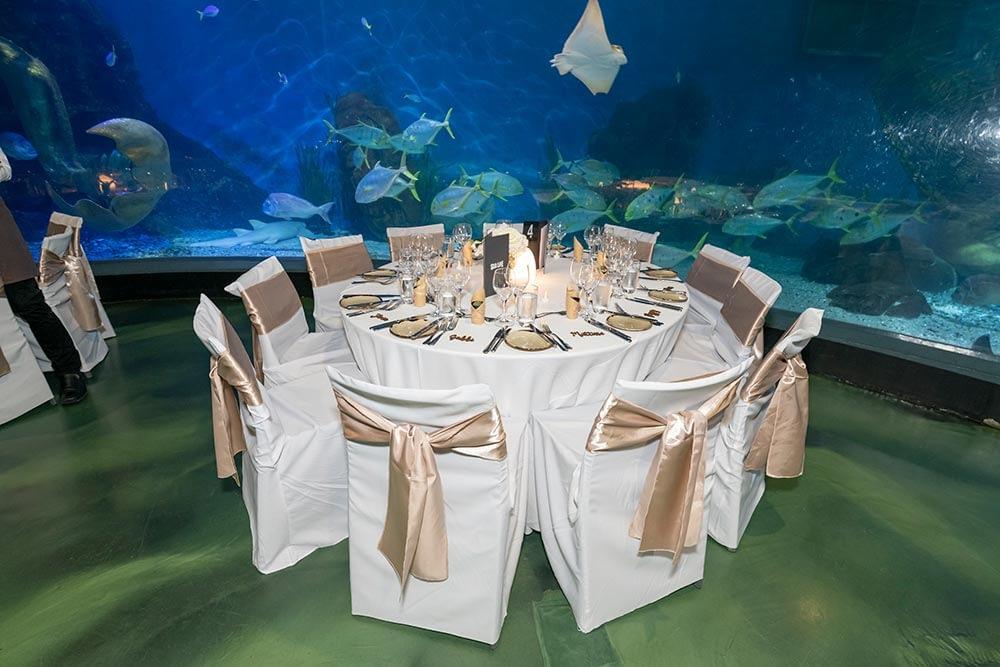 Wedding photograph Melbourne Tom Judy reception at aquarium 13
